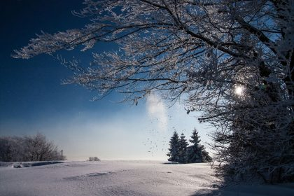 winter field with trees and sunshine