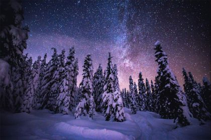 snowy forest at night and starry sky