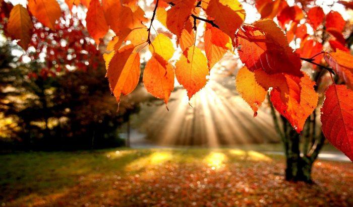autumn leaves insunshine
