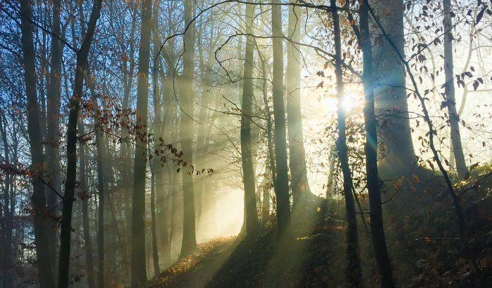 sunlight shining through fall trees